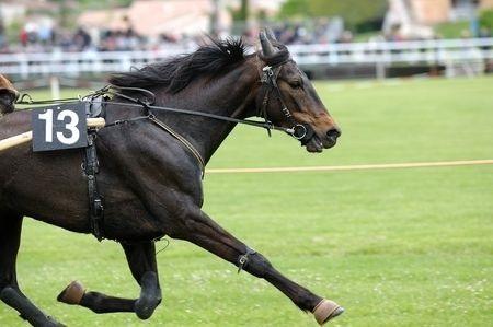 Course d'équitation du « Royal Ascot »